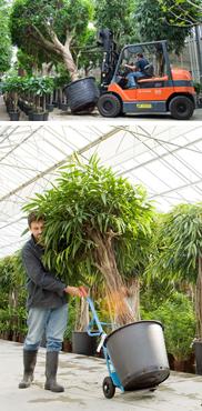 Buchner Transport is als logistieke dienstverlener gespecialiseerd in de internationale distributie van vooral planten onder geconditioneerde omstandigheden.