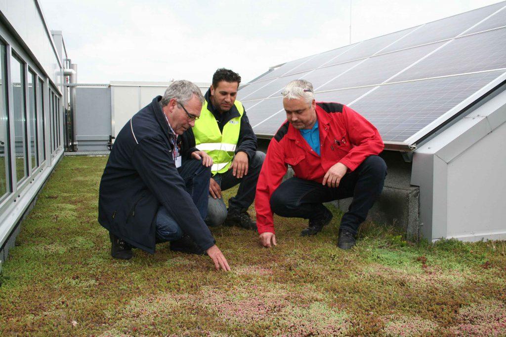 Het sedumdak van Stahl wordt gecontroleerd door uitvoerder Nico Sprangers (links), hovenier Cumhur Cetin (midden) en Stahl maintenance supervisor Jeroen Pieterse.